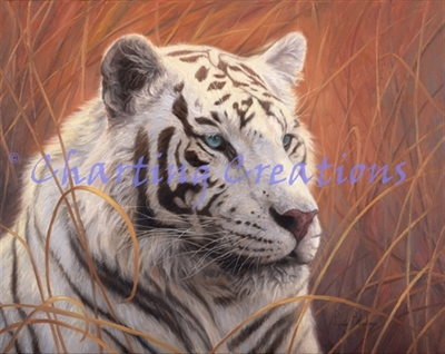 Small White Tiger Portrait