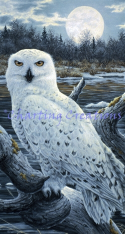 Snippet Snowy Owls