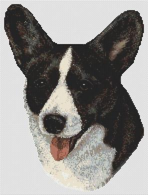 Black and White Cardigan Corgi