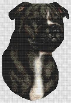 Black and White Staffordshire Terrier