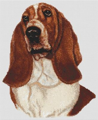 Basset Hound - Red and White