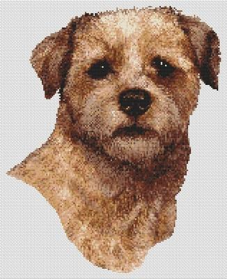 Border Terrier - Red