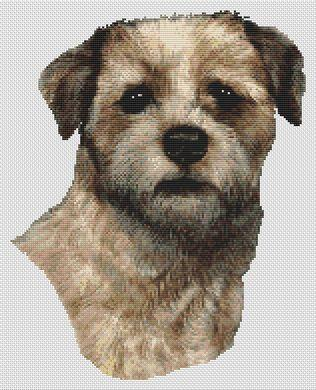 Border Terrier - Wheaten