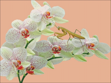 Orchids And Mantis