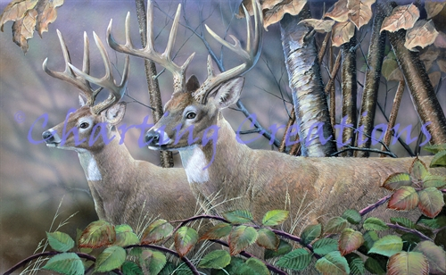 Blackberry Vines White Tail Deer - Click Image to Close