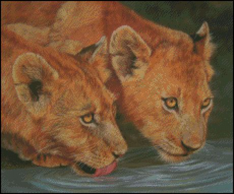 2 Lion Cubs Drinking