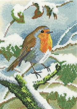 Robin in Winter - Nigel Artingstall Wildlife