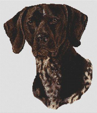 German Shortaired Pointer