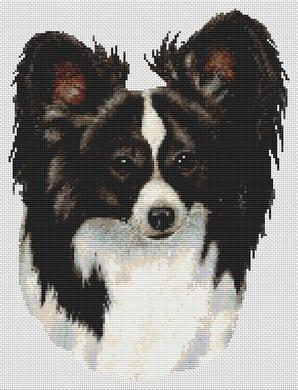 Black and White Papillon