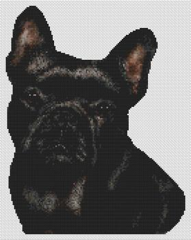 Black French Bulldog