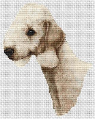 Bedlington Terrier - Sandy