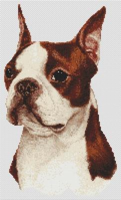 Boston Terrier - Red and White