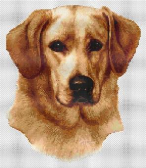 Yellow Labrador Retriever II