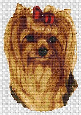 Yorkshire Terrier - Longhaired II