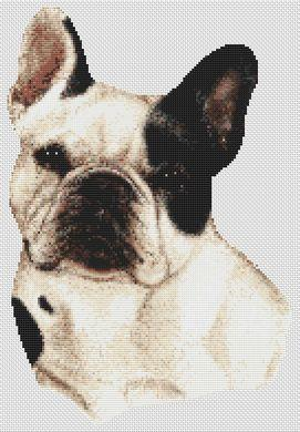 French Bulldog - Spotted