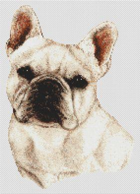 French Bulldog - White