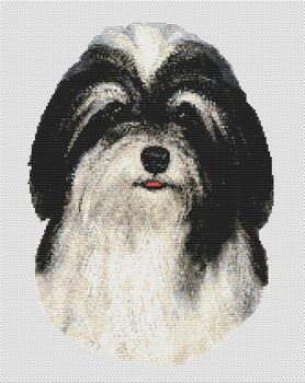 Havanese - Black & White