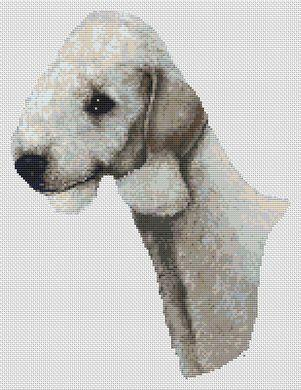 Bedlington Terrier - Blue