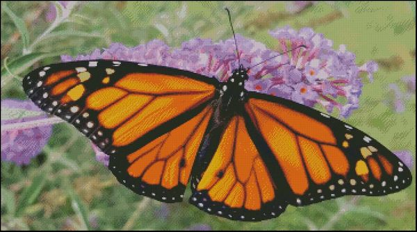 Monarch Butterfly - DS
