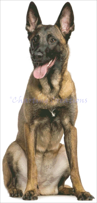Belgian Shepherd Kit